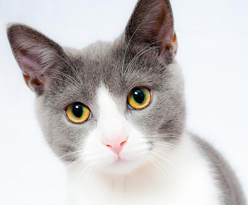 midlands-pet-care-services