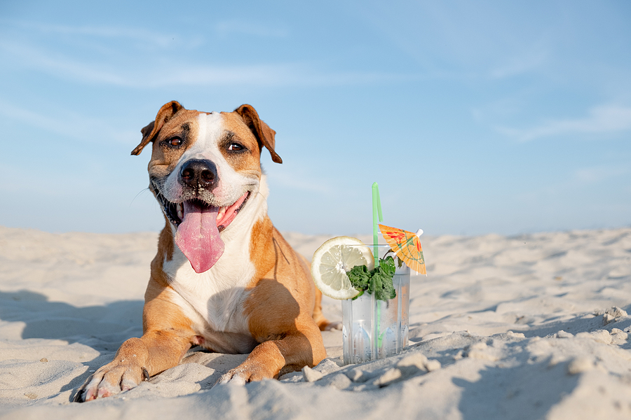pet safety tips for summer