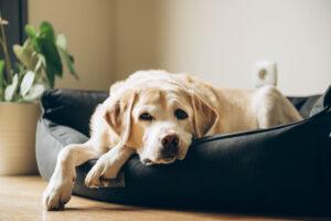 elderly pet care